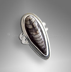 cephalopod ring
