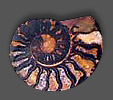 Moroccan Ammonite