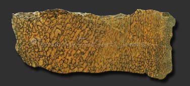 yellow dinosaur bone slab