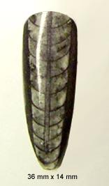 cephalopod cab