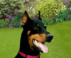 Fred Dog